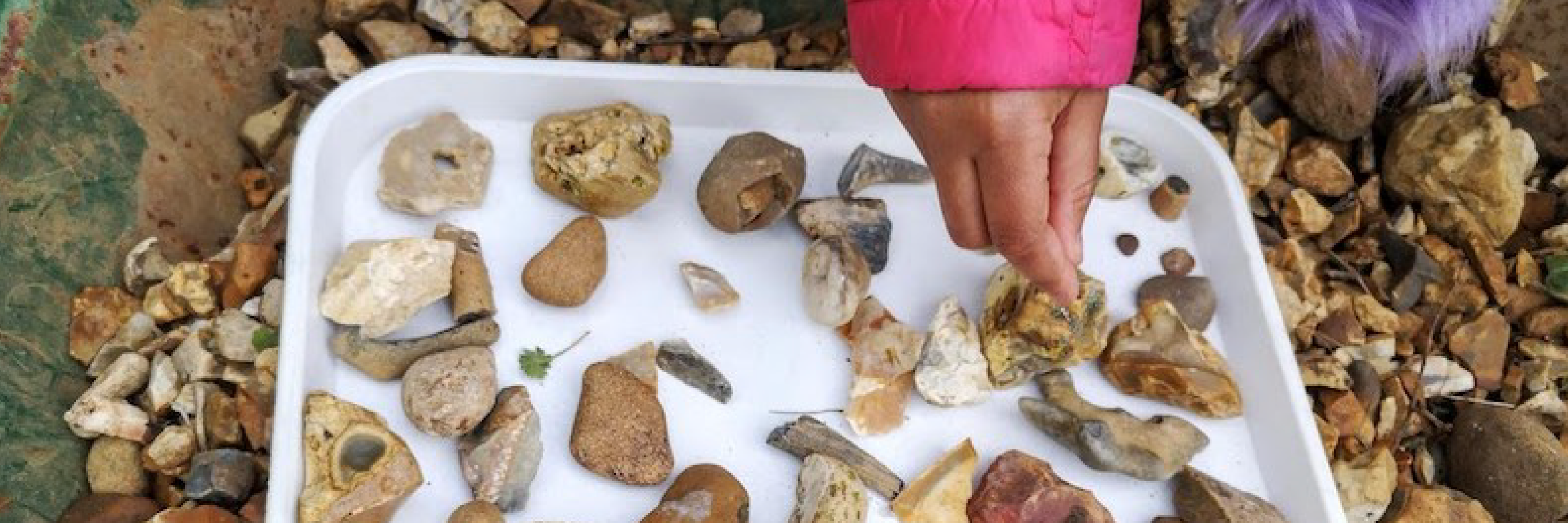 Image of a childs hand sorting through a tray of gravel, looking for fossils