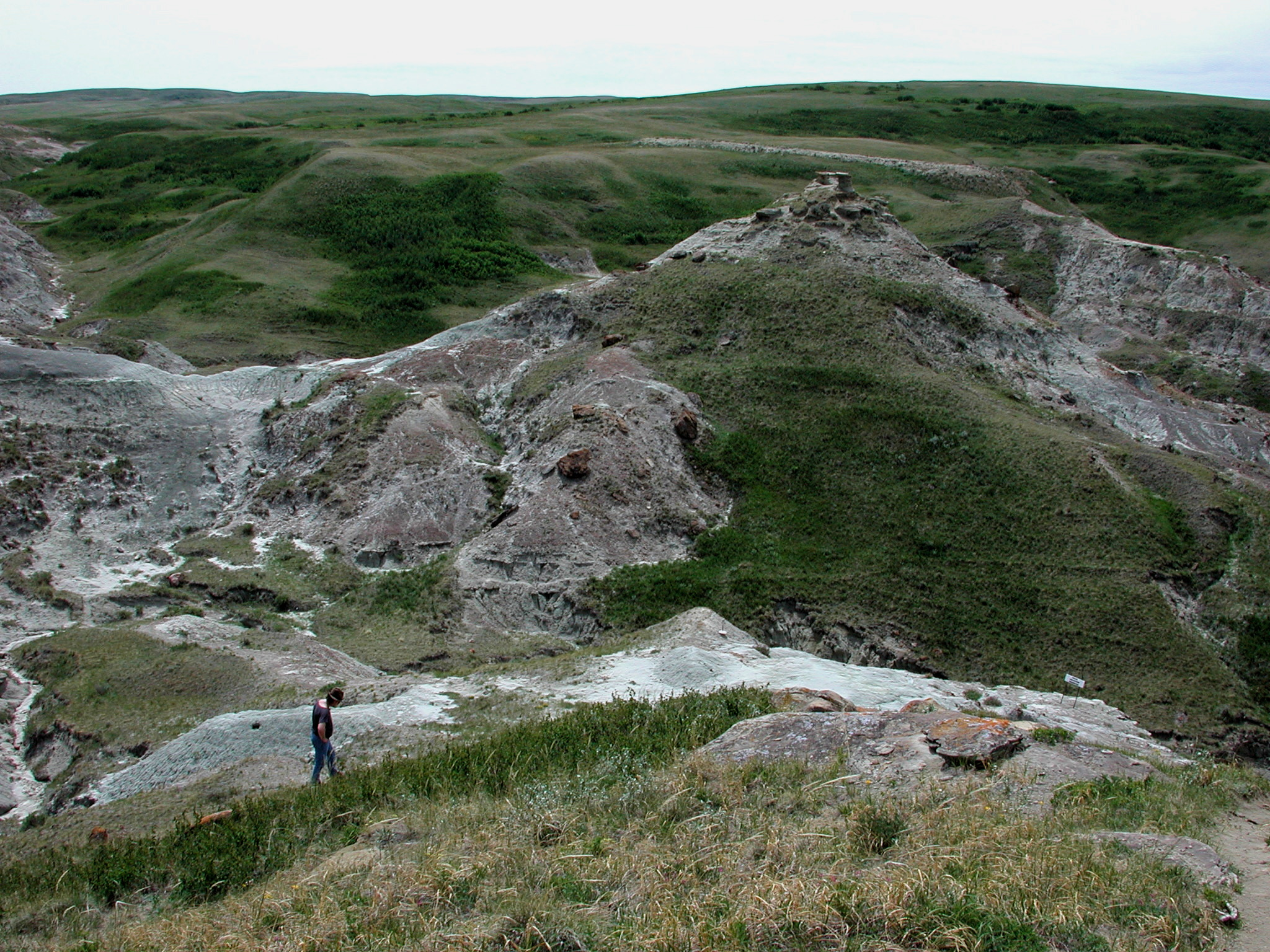 Photograph of the 'Devil's Coulee' field area in southern Alberta, Canada, which is home to an abundance of fossilised dinosaur eggshells. Image used with kind permission of Dr Darla K. Zelenitsky, University of Calgary.