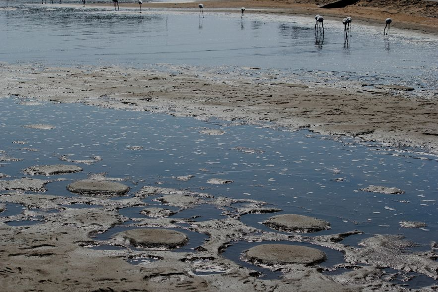 Photograph of circular mud structures produced by flamingos trampling in cirlces when feeding