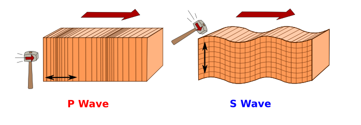 A schematic showing how P- and S-waves propagate through the Earth.