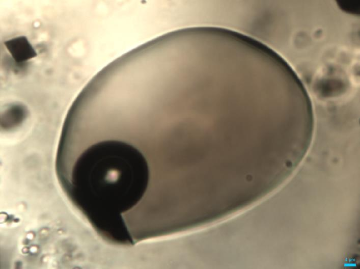 Close up of a melt inclusion with the black, circular vapour bubble