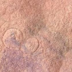Fossil impressions in rocks from Flinders Ranges
