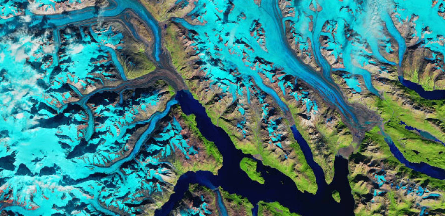 False colour satellite image of tidewater glaciers picked out in bright blue, flowing into Glacier Bay Alaska